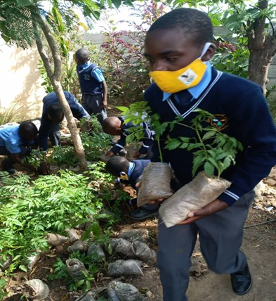 Trees of Change: A young Climate Change Mover collects seedlings donated by a community member